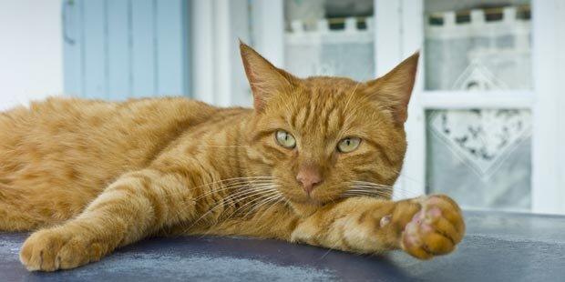 Studie: Katzenbesitzer stehen auf Sadomaso