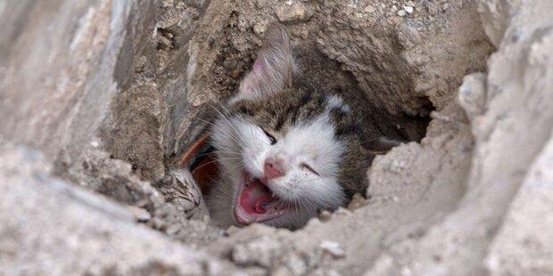 Baby-Katze aus Abflussrohr gerettet