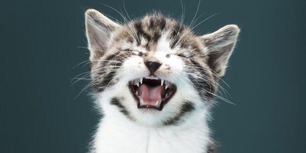 Katzenfänger unterwegs