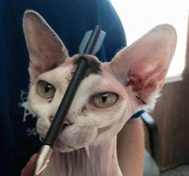 Katze Kopfschus