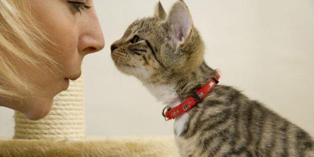 Die häufigsten Katzenirrtümer