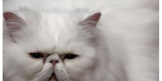 Mann versteckte 150 Katzenleichen in der Wohnung