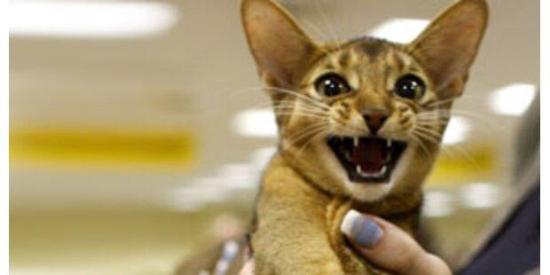Katze überlebte dreiwöchige Reise in Container