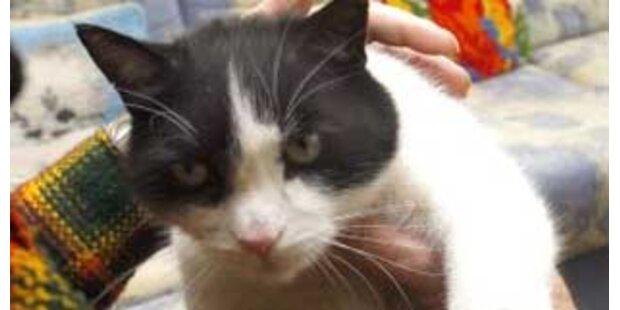 Vater zwang Tochter ihre Katze zu töten