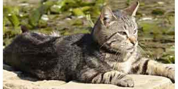 Katze verursacht schweren Fahrradunfall