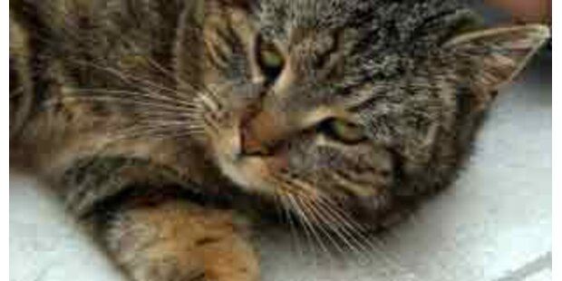 Schotte steckte Katze in Mikrowelle - verurteilt