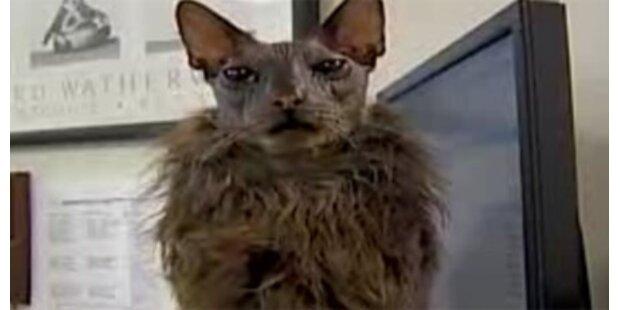 Das ist die hässlichste Katze der Welt