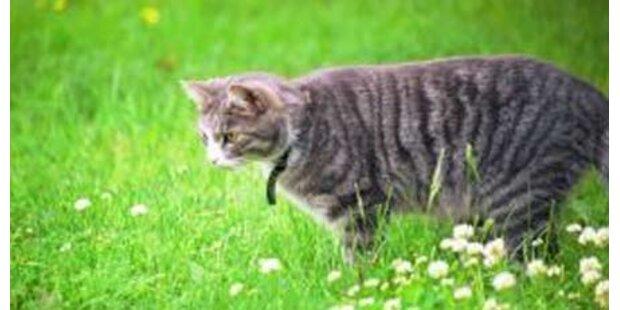 Katze 13 Mal in den Kopf geschossen