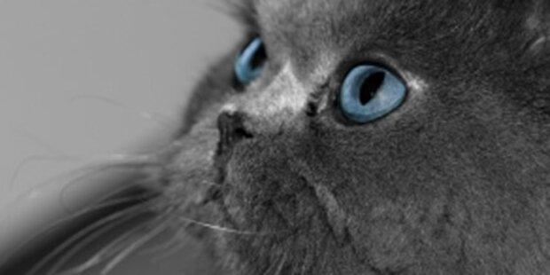 15 Katzen einer Familie vergiftet