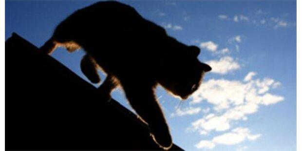 60.000 tote Katzen im abergläubischen Italien
