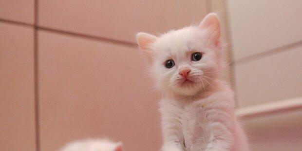 Schulbuch lehrt Kinder das Ersticken von Kätzchen