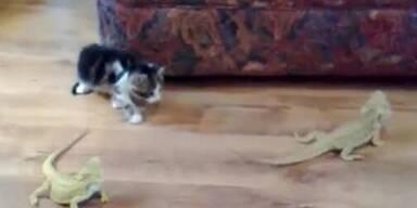 Eidechse versetzt Kätzchen in Panik