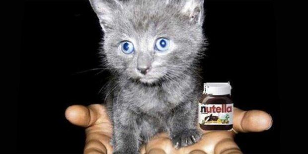 Nutella und Kätzchen: IS verspottet CNN