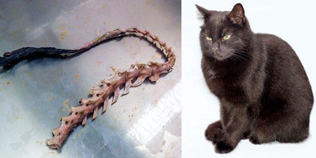 Irrer Satanist kocht Katzen