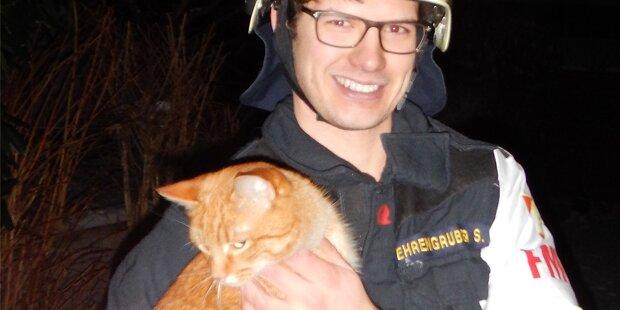 Katze rettet Familie vor Feuersbrunst
