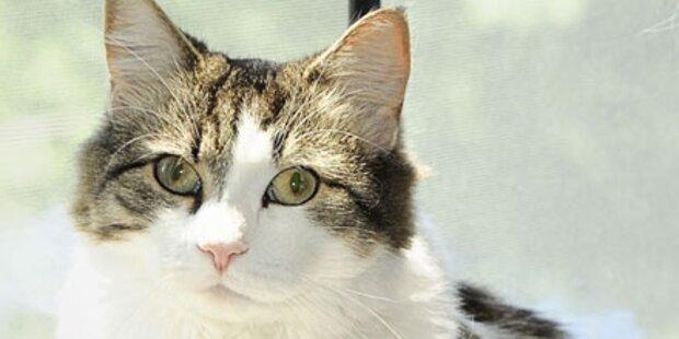 Irrer füttert Hund mit lebenden Katzen