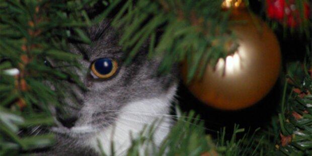 Tiere sind kein Weihnachtsgeschenk