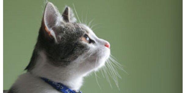 Katze im Haus verringert Herzinfarkt-Risiko