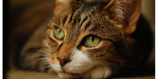 Katze überlebte sieben Wochen eingemauert