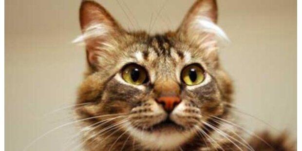 Jäger erschossen 66 Katzen