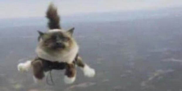 Fallschirmspringende Katzen als Werbespot