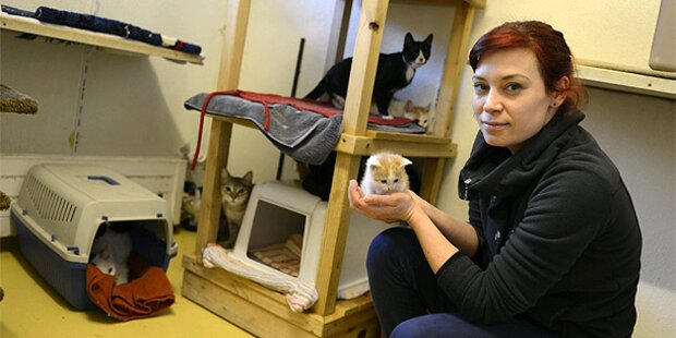 55 Katzen aus einer Wohnung gerettet
