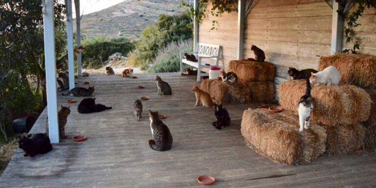 Traum-Jobangebot: Auf 55 Katzen in Griechenland aufpassen