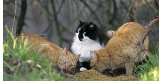 Tierquäler vergiftete Katzen mit Fischköder