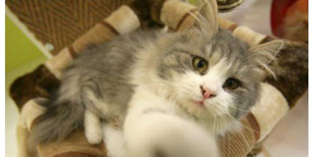 Erstes Wellnesshotel für Katzen