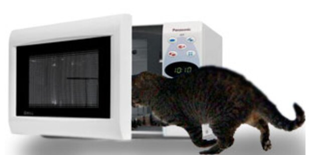 Katzentötung in Mikrowelle versetzt User in Rage