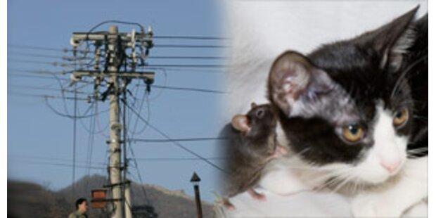 Katze sorgte für Stromausfall in 12.000 Haushalten