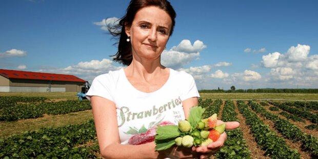 Bibber-Wetter: Obst-Ernte ist bedroht