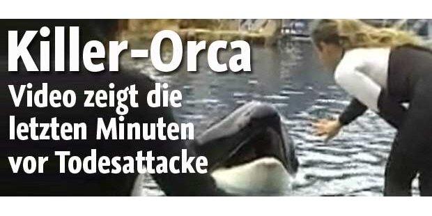 Killer-Orca: Video zeigt die letzte Show