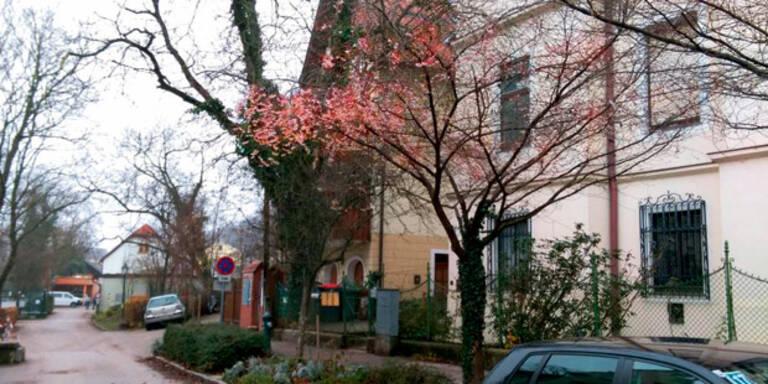 Verrückt: Blumen blühen zu Weihnachten