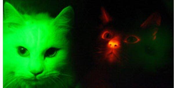 Diese geklonte Katze leuchtet im Dunkeln