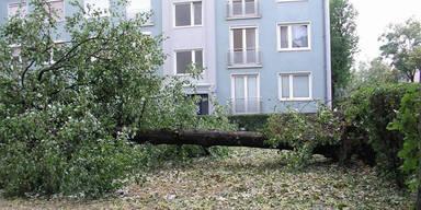 20 Millionen Euro Schaden nach Hagelsturm