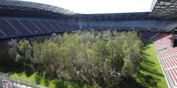 Wirbel um den Wald im Stadion