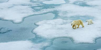 Klimawandel: 2017 unter wärmsten Jahren
