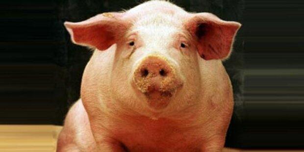 EU-Parlament blockiert Klonfleisch