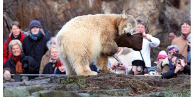 Um Eisbär Knuts Werbemillionen droht Ärger
