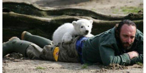 Eisbär Knut sucht seinen Ziehvater