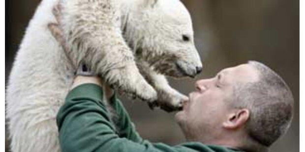 Knut hat einen neuen Ziehvater