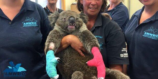 Handschuhe für Koalas aus aller Welt