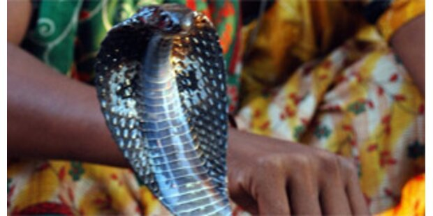 Mit giftiger Kobra stundenlang im Auto gefahren