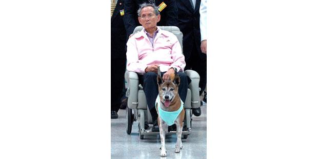 koenig_hund_thailand_afp1.jpg