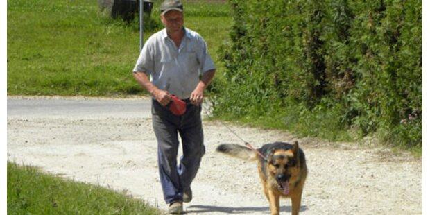 Schäferhund schlug Diebe in die Flucht