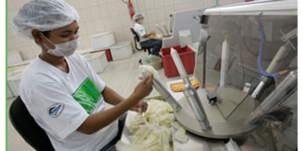 Kondomfabrik schützt den Regenwald am Amazonas