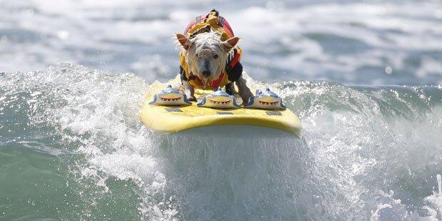 Kalifornien: Hier surfen Hunde