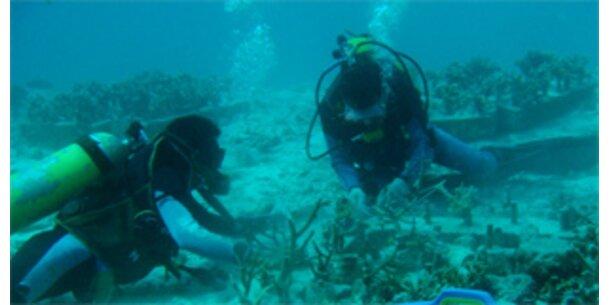Ein Drittel aller Korallenriffe bedroht