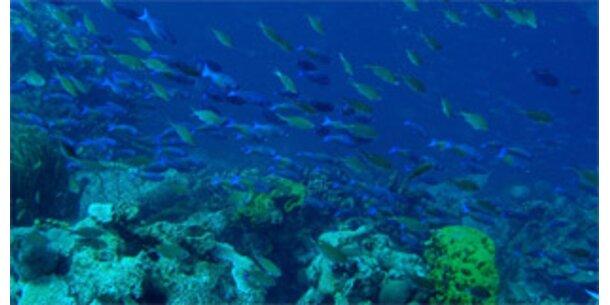 Unsere Weltmeere sind in Gefahr